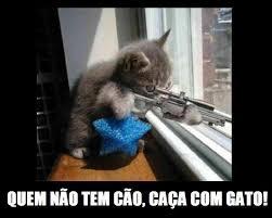 Quem não tem cão caça com gato