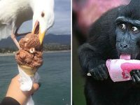animals eating icecream