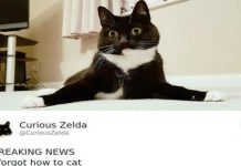 zelda the cat tweets