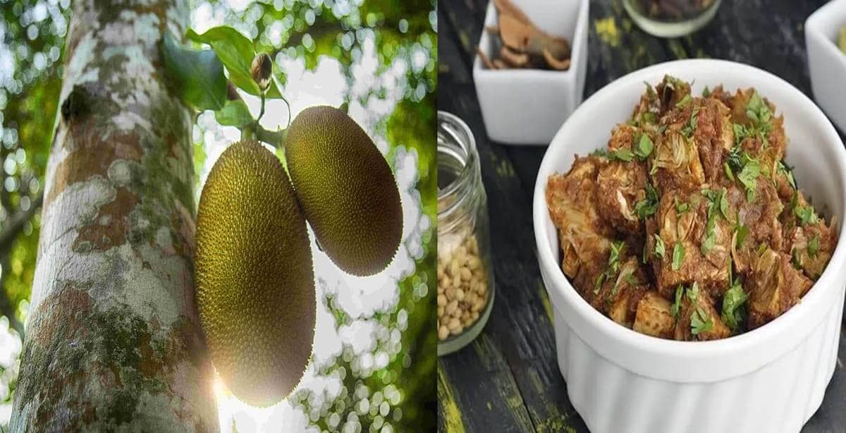 Food in the times of corona: how the unsightly Indian jackfruit is enjoying its 'meatiest' of times!
