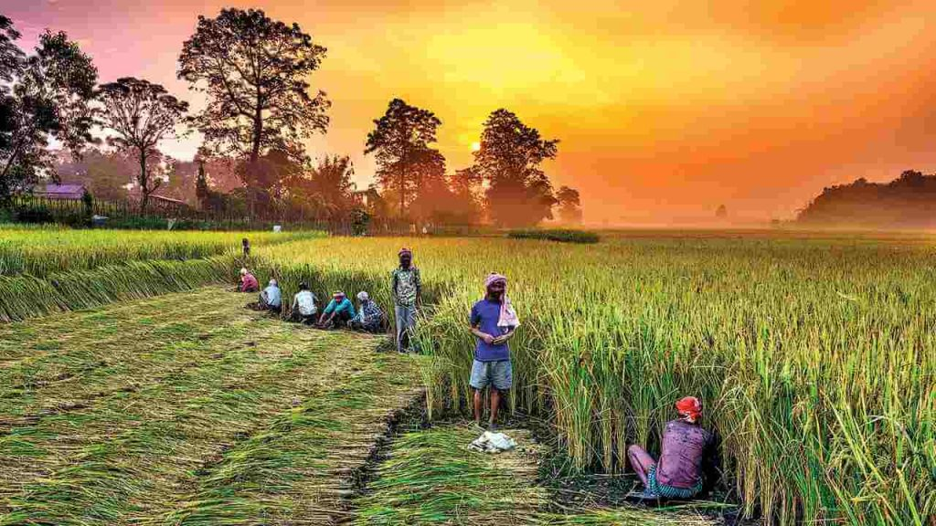 top 10 agricultural states in india Chhattisgarh