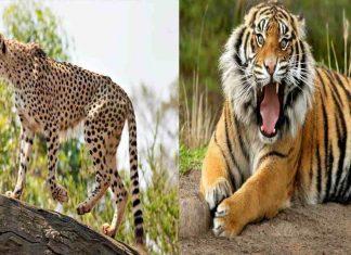 species facing extinction