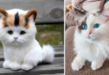top 10 cutest cats